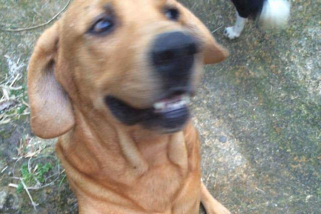 cachorro-barra do sambaqui