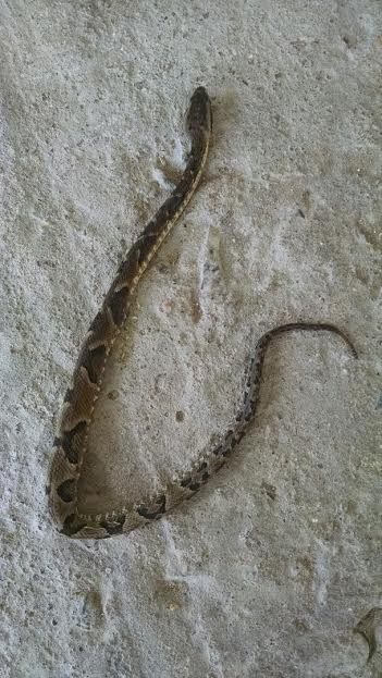 Cobras aparecem em casa e deixam proprietários em alerta nos Ingleses
