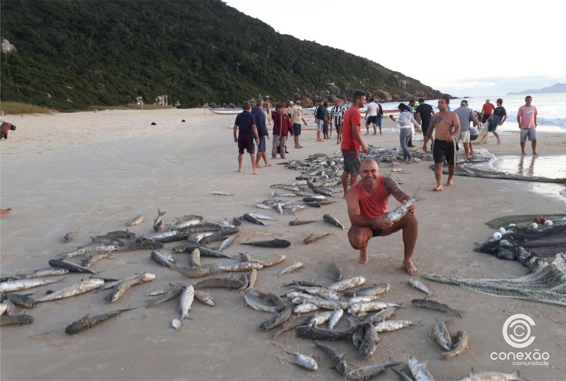 Primeiro lanço de tainha é feito por pescadores da Praia dos Ingleses no Norte da Ilha