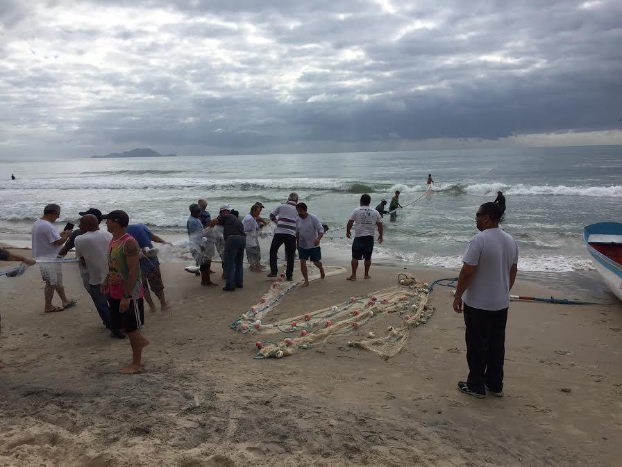 Lanço coletivo captura 3,3 mil Tainhas na Praia dos Ingleses