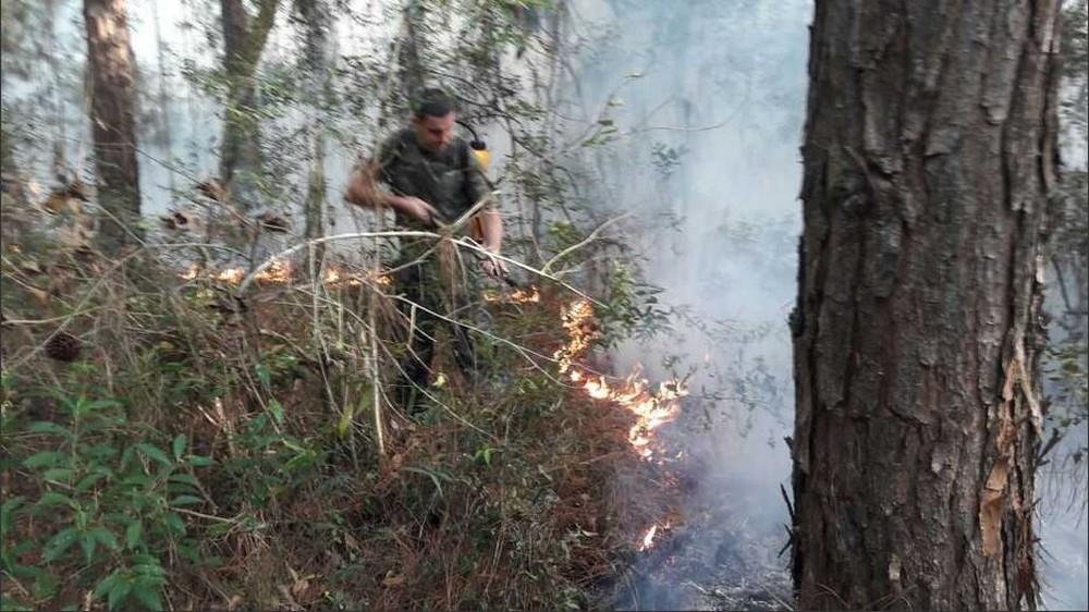 Fogo no Parque Florestal do Rio Vermelho foi causado por oferenda, diz PM
